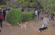 Πάρκο κοινωνικοποίησης και άθλησης σκύλων Άλσους Βεΐκου