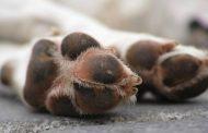 Ανακοίνωση σχετικά με τη δηλητηρίαση ζώων από φόλες στο Άλσος Βεΐκου