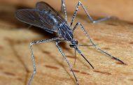 Πρόγραμμα καταπολέμησης κουνουπιών στο Δήμο Γαλατσίου