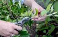 Εργασίες κλαδέματος και καθαρισμού χόρτων στον Δήμο Γαλατσίου